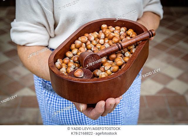 Hazelnuts at the Abrigo Farm near Alba, Langhe, Cuneo, Piedmont, Italy
