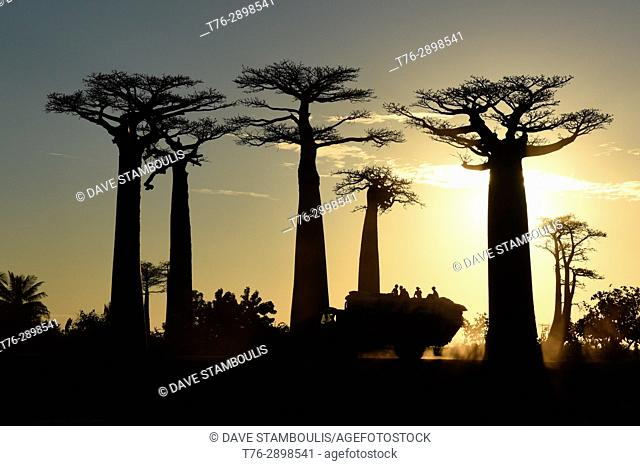 Sunset on the Avenue of the Baobabs, Madagascar