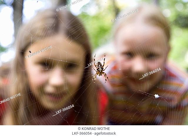 9 year old girls looking at a garden spider in the web, Upper Bavaria, Germany, Europe