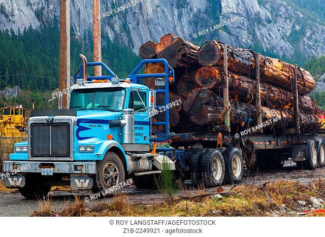 Blue logging truck loaded with Western Red Cedar logs in Squamish, Canada