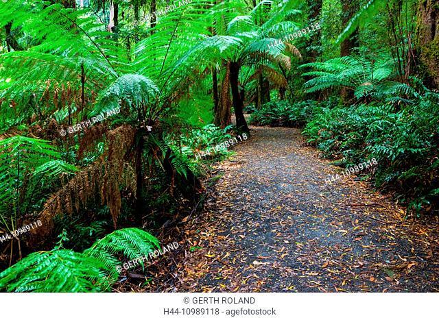 Great Otway National park in Victoria, Australia