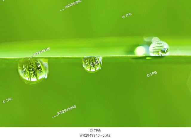 morning drops on fresh green leaf