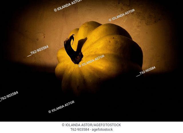 Close-up of a pumpkin  Still Life  Color, Yellow