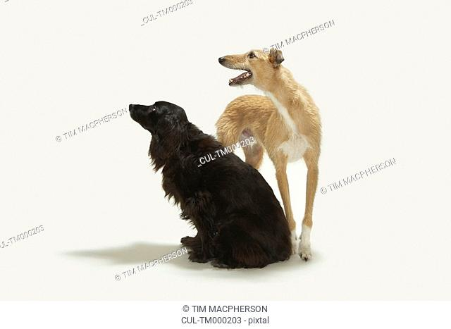 Portrait of two dogs