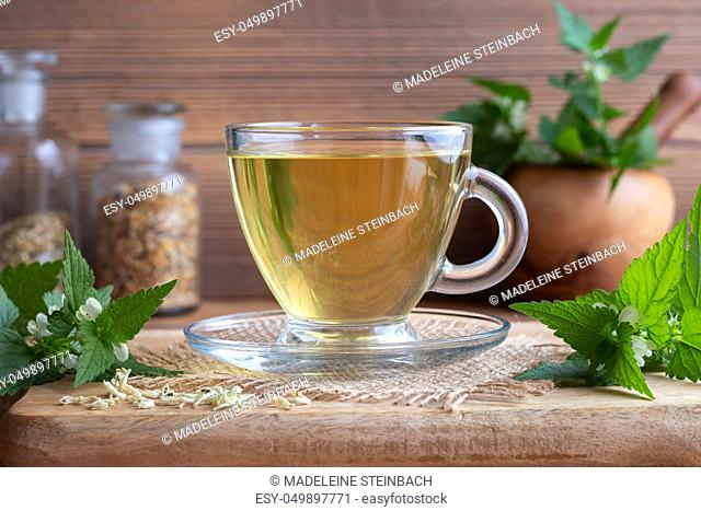 A cup of white dead-nettle tea with fresh and dried Lamium album plant