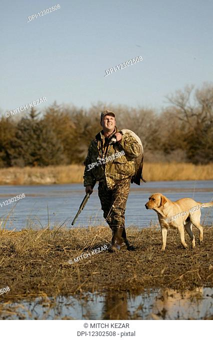 Goose Hunter Carrying Dead Goose With Yellow Lab