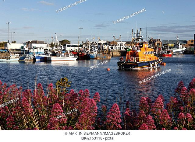 Fishing port of Howth, near Dublin, County Fingal, Leinster, Ireland, Europe, PublicGround