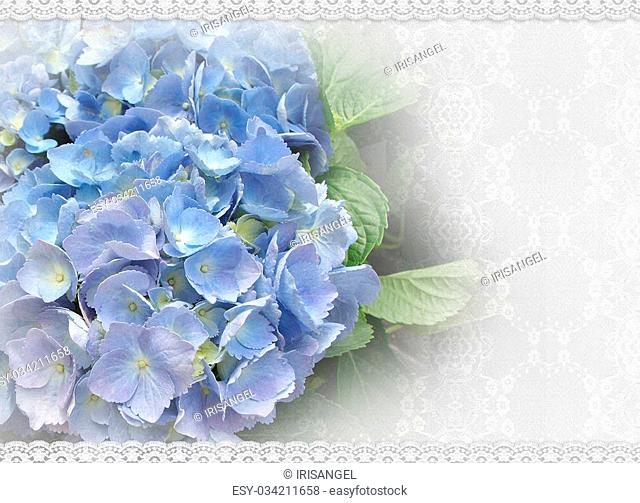 Image and illustration composition of beautiful blue hydrangea flowers on lace background for wedding, anniversary or special occassion invitation with copy...