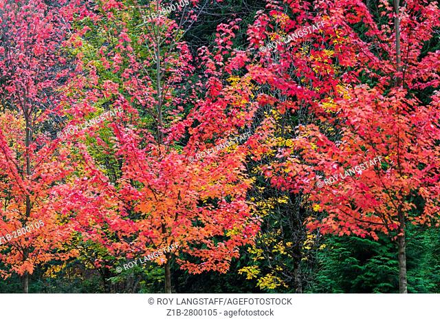 Colours of the autumn season in Vancouver