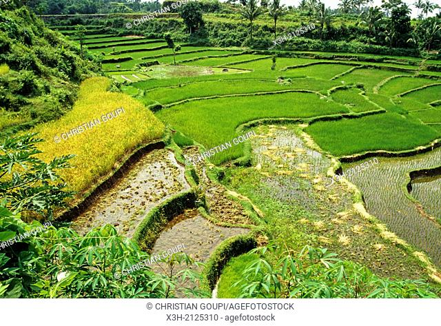 paddy fields, Lombok island, Lesser Sunda Islands, Republic of Indonesia, Southeast Asia and Oceania
