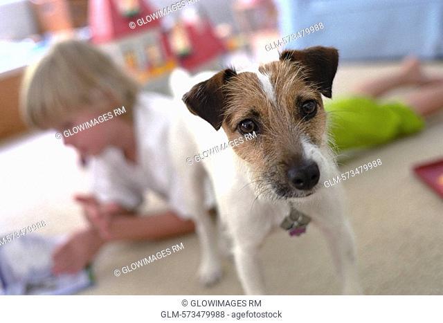 Close-up of a dog beside a boy