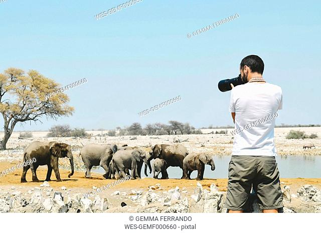 Namibia, Etosha National Park, photographer taking pictures of elephants near a waterhole