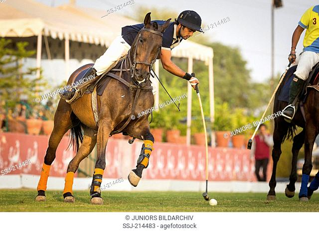 Polo Pony. Player in a polo match. Rajasthan, India