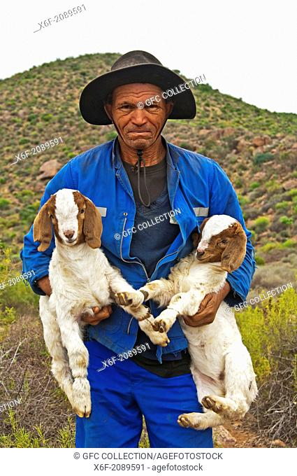 Nama goat herder carryign two Boer goatlings, near Kuboes, Richtersveld, Northern Cape province, South Africa
