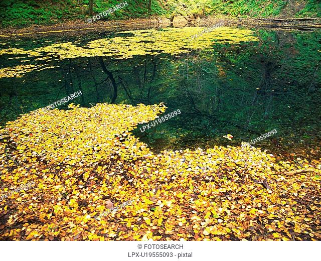 a Pond With Autumn-colored Leaves On Top of It, High Angle View, Aomori Prefecture, Japan