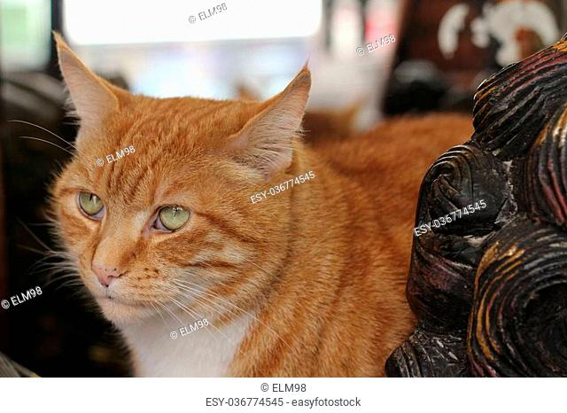 Handsome face of a ginger tom cat sat with wooden decoration