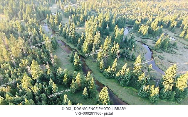 Aerial footage of a forest in the sunlight, Izery Mountains, Poland
