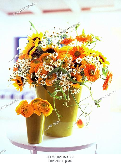 camomile, buttercups, sun flowers, marigold and vetches