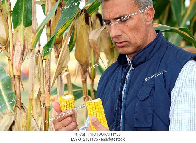 A corn farmer