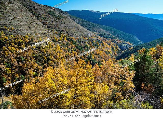Bescaran valley, Alt Urgell, Lleida, Catalunya, Spain