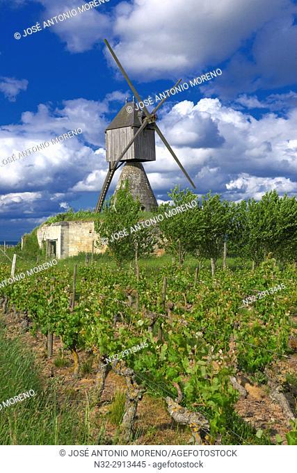 Montsoreau, Loire River, Windmill and vineyard near Montsoreau, Labelled Les Plus Beaux Villages de France, The Most Beautiful Villages of France