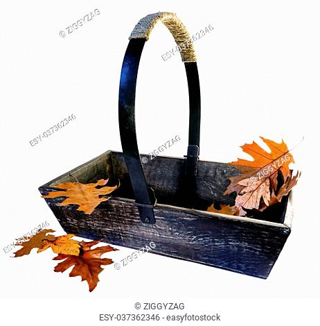 Old wooden gardening trug filled with Autumn leaves