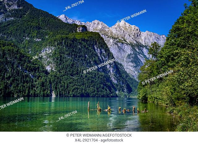 View of the Koenigssee Lake near Salet in the Berchtesgaden National Park, Bavaria, Upper Bavaria, Germany, Europe