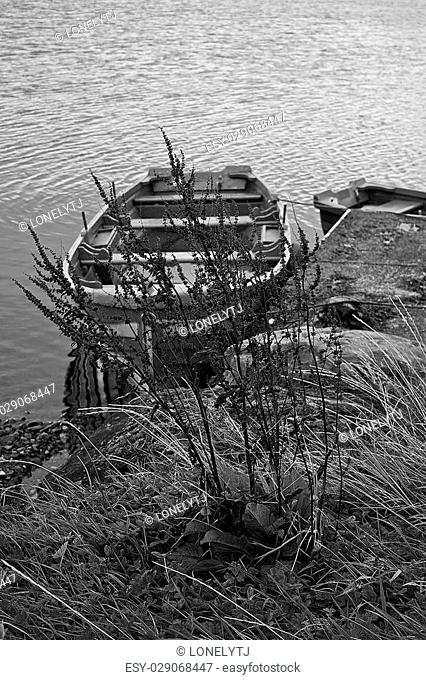 Barley stem and a boat, tickles by the wind. Co. Galway, Ireland. Black and White