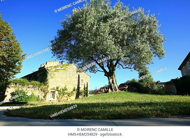 France, Vaucluse, Luberon, Lourmarin, labelled Les Plus Beaux Villages de France The Most Beautiful Villages of France, la Feniere Inn
