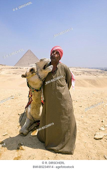 Camel Driver in Front of Pyramid of Gizeh, Egypt, Kairo, Gizeh