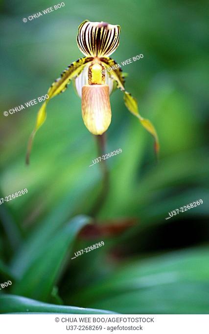 Orchids. Image taken at Orchid Garden, Kuching, Sarawak, Malaysia