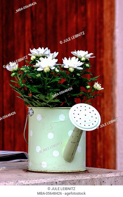 Watering can, flowers