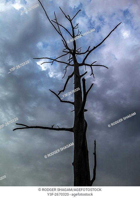An old gumtree. Grew in the wrong place. Ringbarked and left to die and slowly decompose