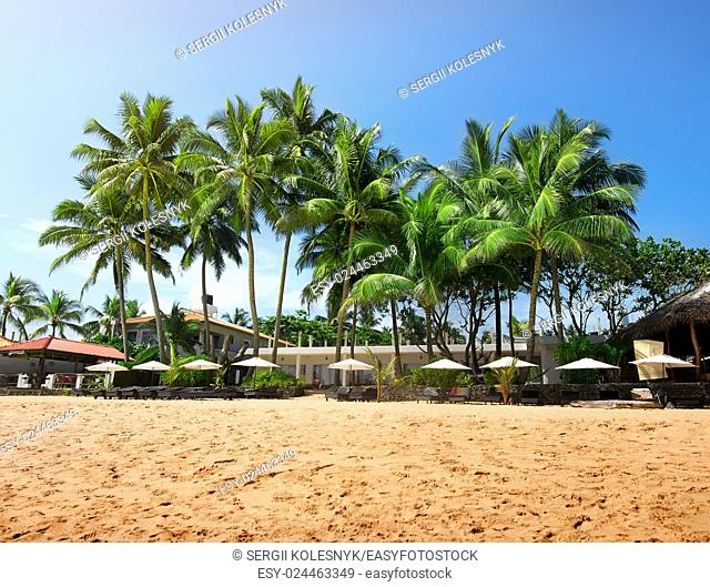 Green palm trees on a beach of Indian ocean