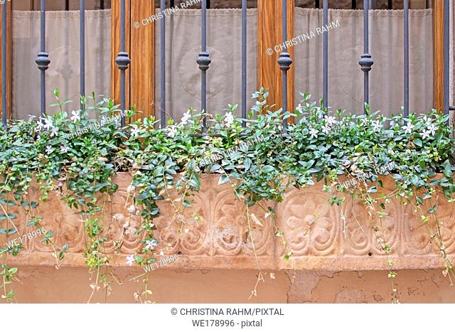 Beautiful terracotta flowerpot with blossoming plants and wrought iron on window in Valldemossa Mallorca