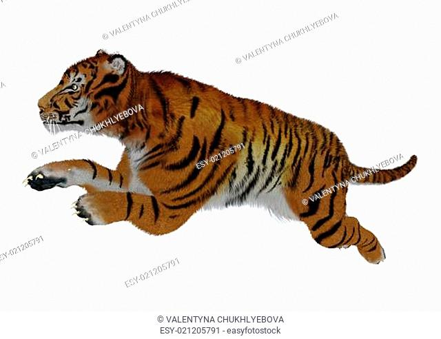Jumping Tiger on White