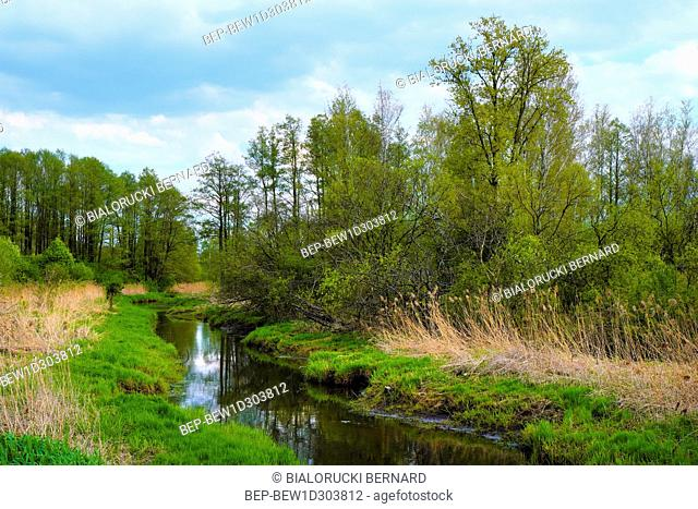 Panoramic view of wetlands covered with early spring green grass and woods in Biebrza River wildlife refuge in north-eastern Poland