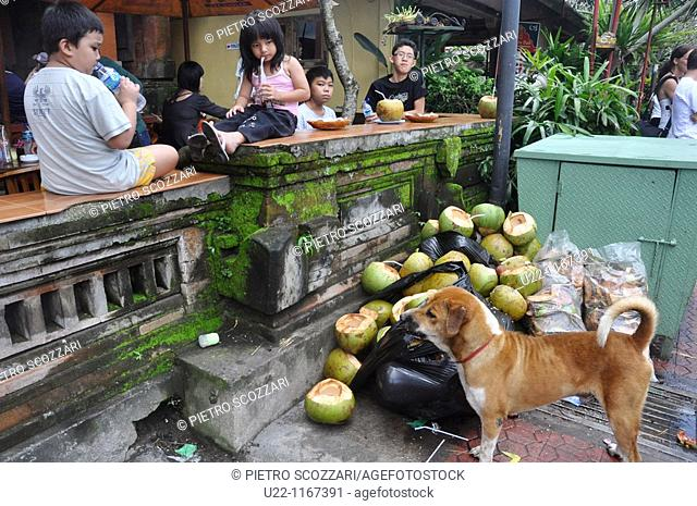 Ubud (Bali, Indonesia): a street dog waiting for some leftover from tourists eating at Bu Oka restaurant, specialized in babi guling (suckling pig)
