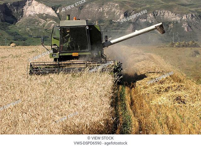 Harvesting,Xinjiang,China