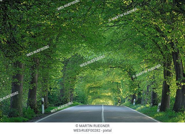 Germany, Mecklenburg-Western Pomerania, Tree lined rural road