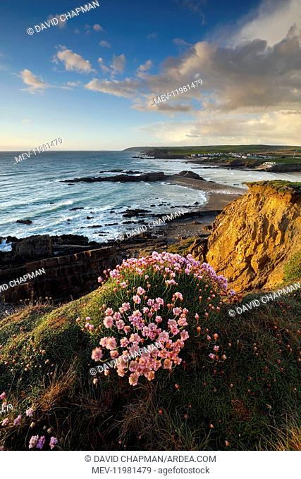 Bude - Cliffs and Coast - Cornwall - UK