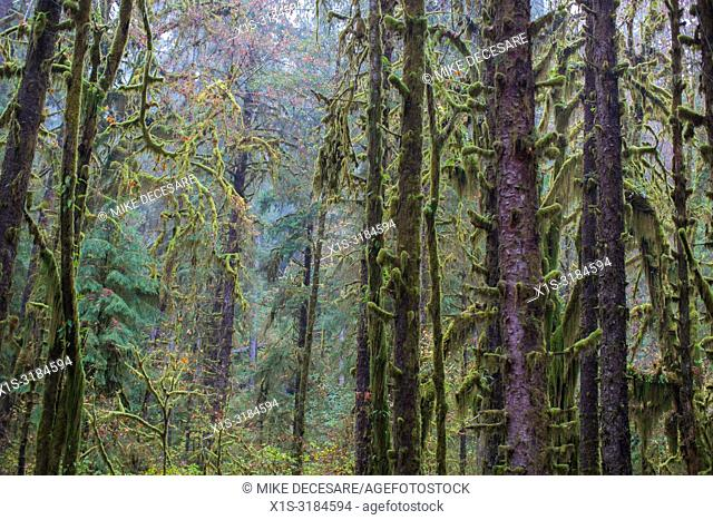 The Hoh Rain Forest in Washington state is one of only two such rain forests in North America