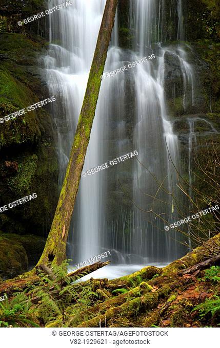 Lower Parker Falls, Umpqua National Forest, Oregon