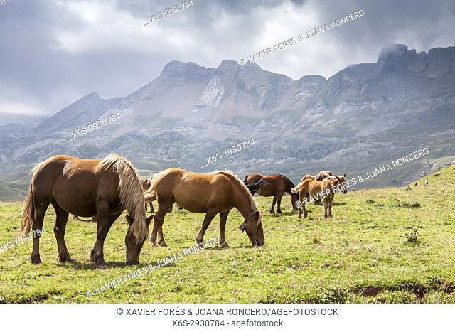 Aguas Tuertas in Hecho valley, Pyrenees, Huesca, Spain