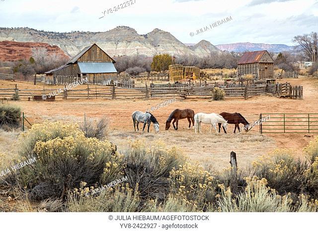 Farm with four horses in Southwestern Utah