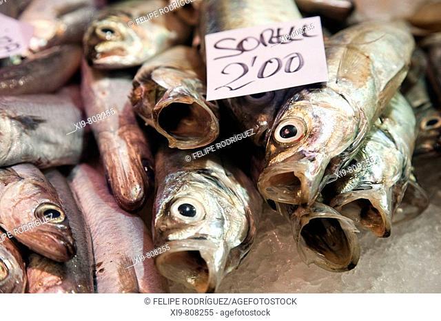 Mackerels in Sant Antoni market, Barcelona. Catalonia, Spain