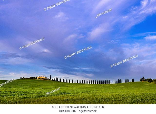Typical green Tuscan landscape in Bagno Vignoni, Val d'Orcia, farm on hill, fields, cypresses and blue, cloudy sky, San Quirico d'Orcia, Tuscany, Italy