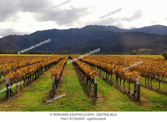 New Zealand Viticulture In The North Of The South Island 4 26 2018