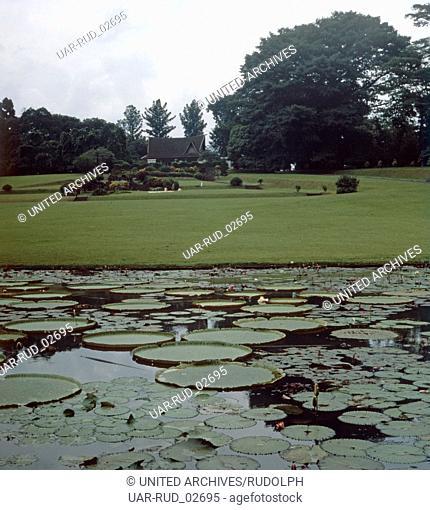 Ein Besuch des Botanischen Gartens von Bogor auf Java, Indonesien 1980er Jahre. Visitation of the botanical garden of Bogor on Java, Indonesia 1980s