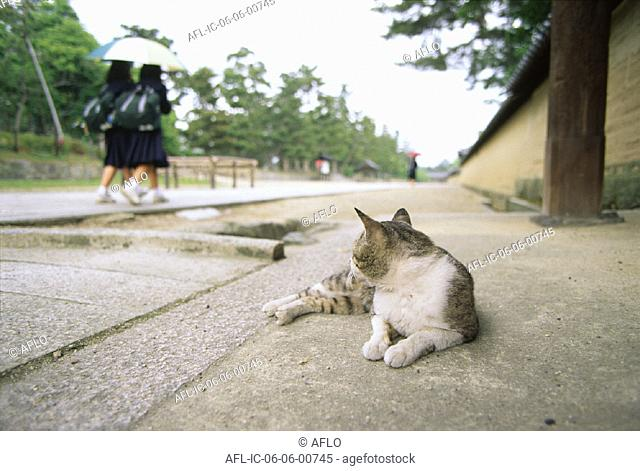 A cat lying down in a park alley
